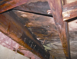 mold and rot in a Fort Worth crawl space