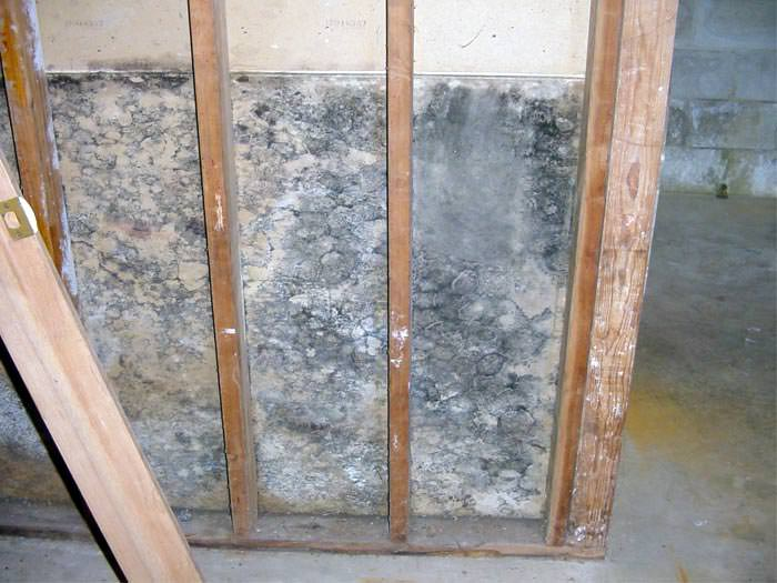 A No Nonsense Look At How Mold Affects Everyone In Your Home